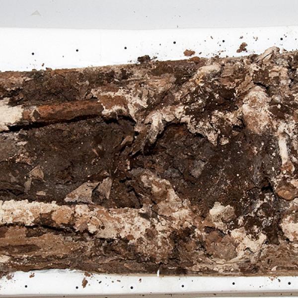 Les restes de Pere el Gran conservades a la tomba. S'observa l'estat de semiesqueletització del cos (Autors: Carles Aymerich i Ramon Maroto Centre de Restauració de Béns Mobles de Catalunya)