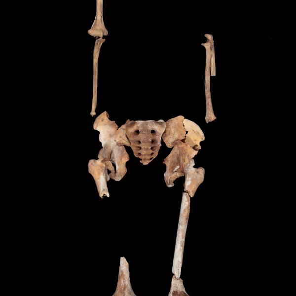 Individu 4 segons la recomposició antropològica (Autor: Carles Aymerich i Ramon Maroto Centre de Restauració de Béns Mobles de Catalunya)
