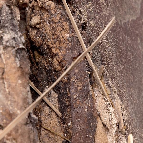 Fragments de palma seca situats sobre les extremitats inferiors (Autors: Carles Aymerich i Ramon Maroto Centre de Restauració de Béns Mobles de Catalunya)
