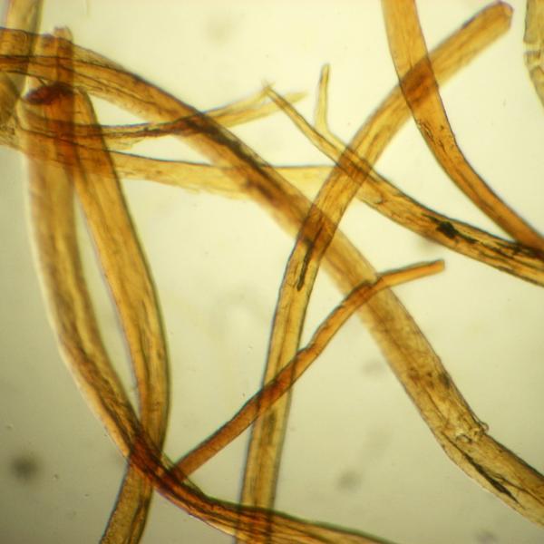 Microscòpia de les fibres de llana dels fils de la capa casulla que cobria el fardell (Autors: Centre d'Innovació Tecnològica. Universitat Politècnica de Catalunya)