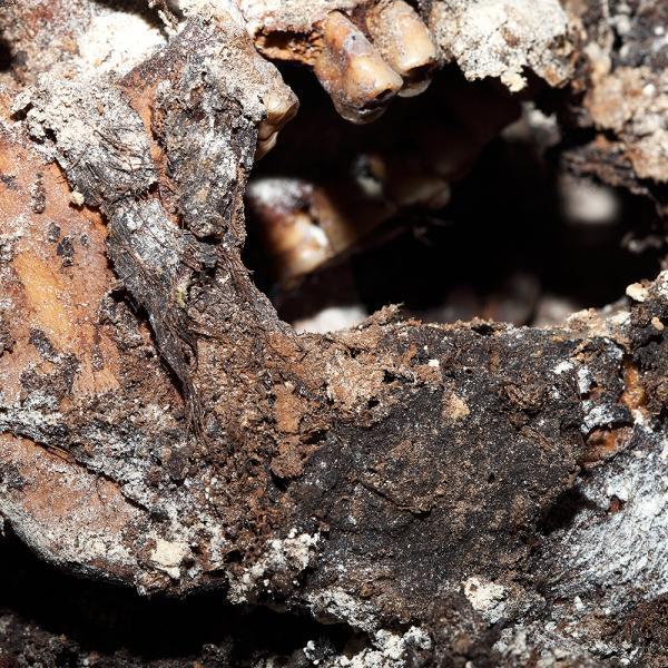 Restes de pèls a la barba (Autors: Carles Aymerich i Ramon Maroto Centre de Restauració de Béns Mobles de Catalunya)