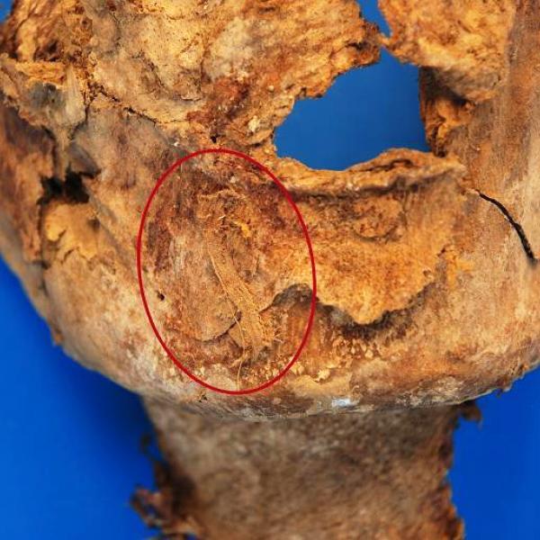Posició del petit fragment de tèxtil conservat sobre la barbeta (Autors: Grup de Recerca en Osteobiografia. Universitat Autònoma de Barcelona)